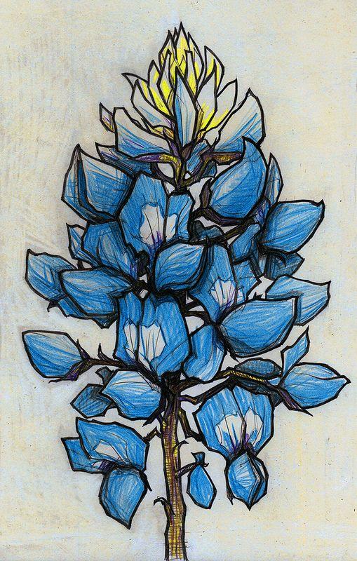 TEXAS BLUEBONNET (Lupinus texensis) | by MATT MIMS