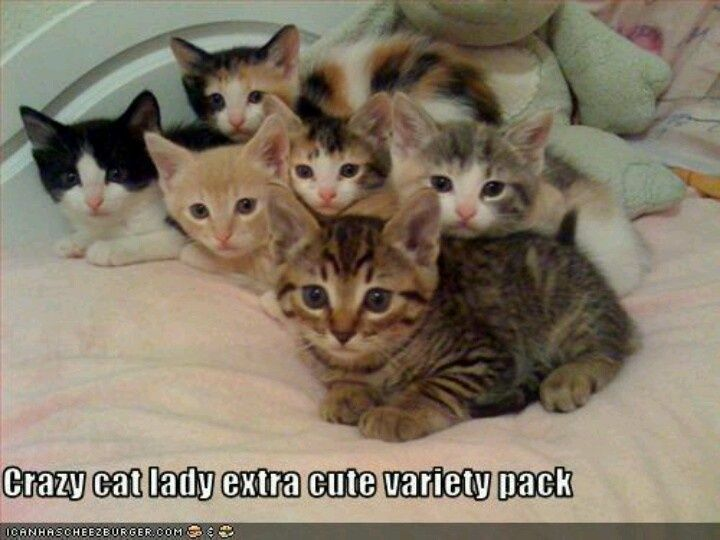 Crazy Cat Lady Variety PackVarieties Pack, Funny, Kittens, Lady Extra, Cat Stuff, Catstuff, Crazy Cat Lady, Kitty, Animal