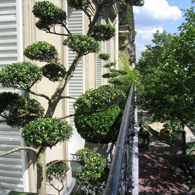 24 best images about am nagement paysager on pinterest - Amenagement balcon paris ...