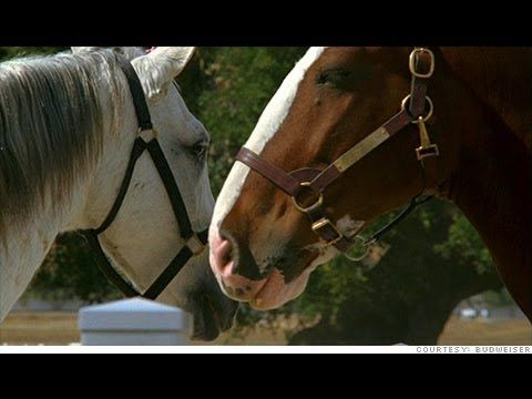 19 best fav super bowl commercials images on pinterest super bowl budweiser horses in love commercial aloadofball Choice Image