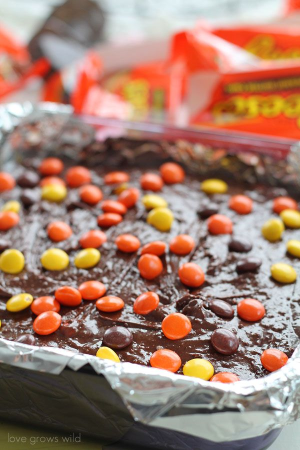 Reese's Stuffed Pretzel Brownies - Gooey chocolate brownies and a salty-sweet pretzel crust, stuffed with Reese's peanut butter cups and topped with Reese's pieces! A Reese's lover's dream!   LoveGrowsWild.com