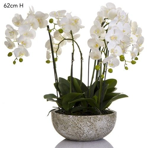 SHACK : Orchid x 7 in clay pot round white
