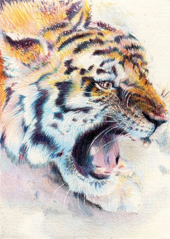 "Original ACEO - Hear Me Roar - Tiger Illustration - 2.5"" x 3.5"" Coloured Pencil - Proceeds to benefit WaterAid"