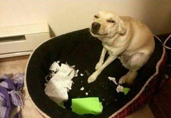 Lol dog ate homework
