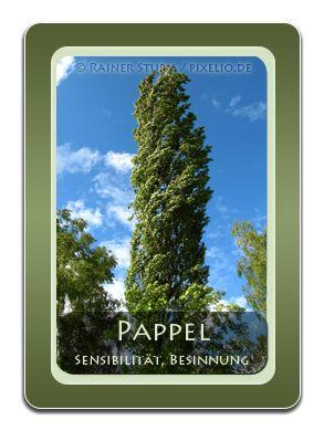 Unique Seine Botschaft Die Pappel ist ein Licht und Platz liebender Baum der an vielen