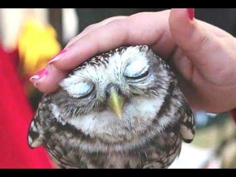 Cute Animals Cuddling - A Cute Animal Videos Compilation 2015