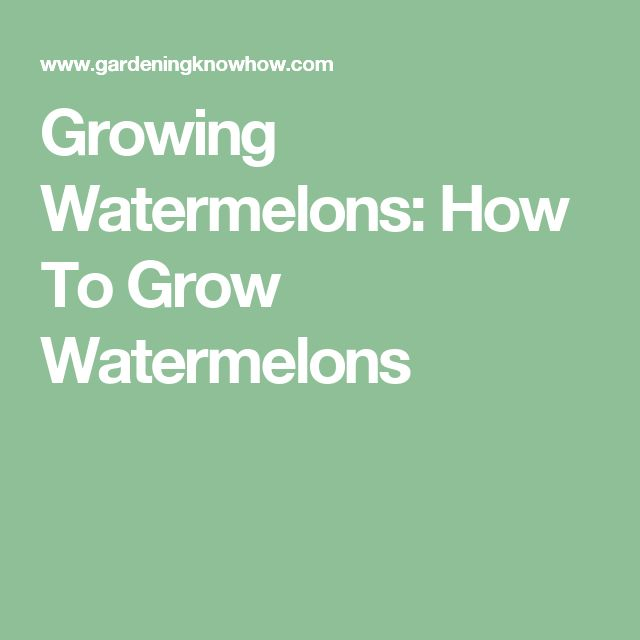 Growing Watermelons: How To Grow Watermelons
