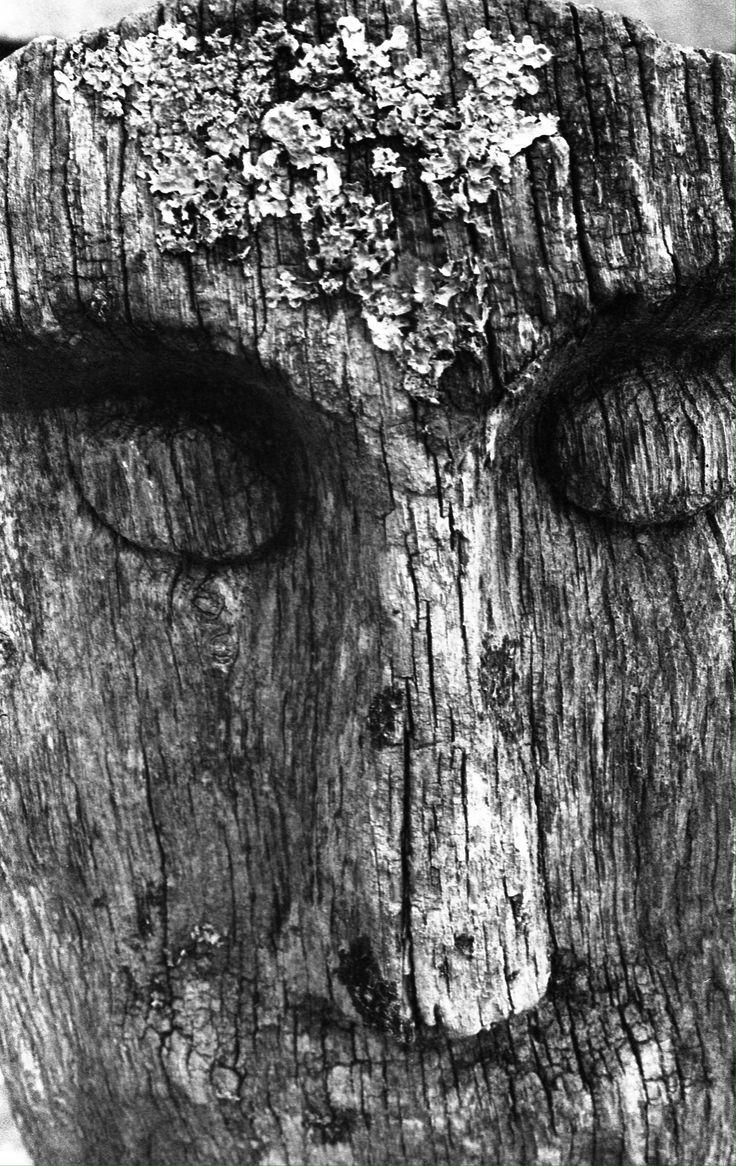 Old wooden carving (Ancient Technology Centre, Cranbourne)