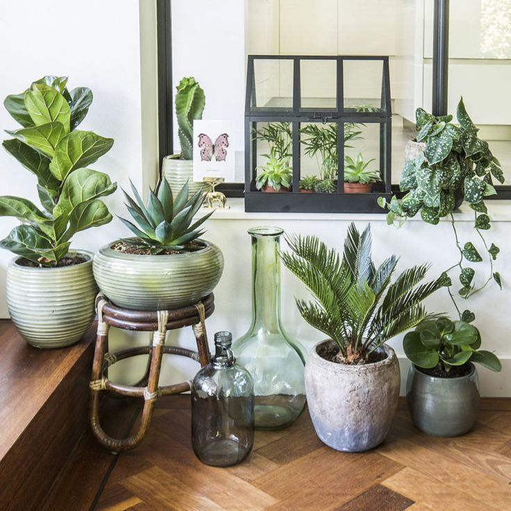 Betere Inspiratie (With images) | Interior plants, Plant decor, House ZU-89