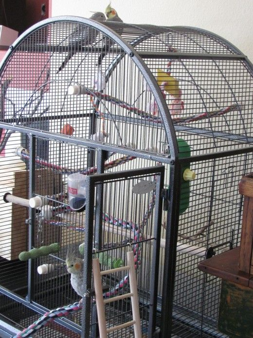 How To Set Up A Bird Cage For A Cockatiel Parakeet Or