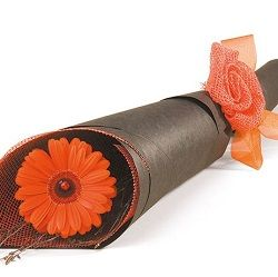 Birthday flowers and gifts: 'Single Flowers wrap only'