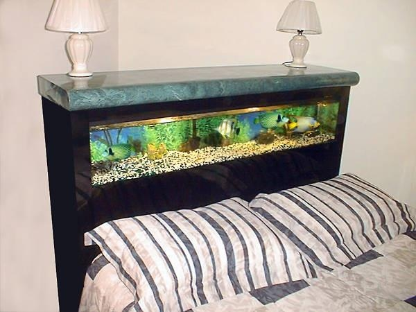 Bed frame fish tank!