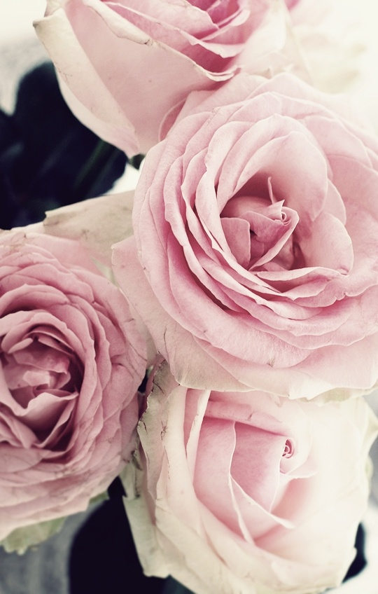 roser: Gardens Ideas, Pink Flowers, Rosescolor Rose, Rose Rose, Colors Rose, Creamy Pink, Grace Flowers, Flowers Make Me Smil, Flowers Beautiful