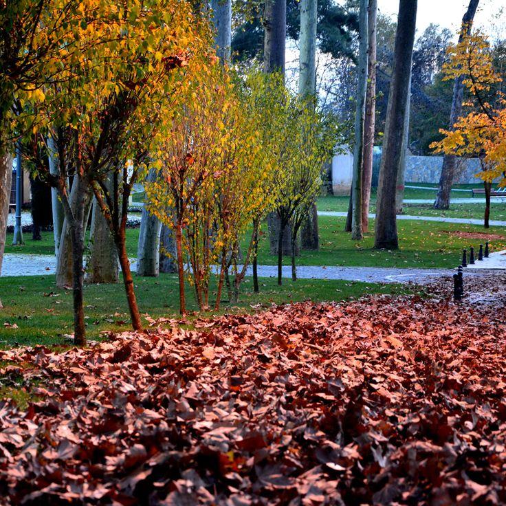Beykoz Korusu Sarı Yapraklar ve Sonbahar