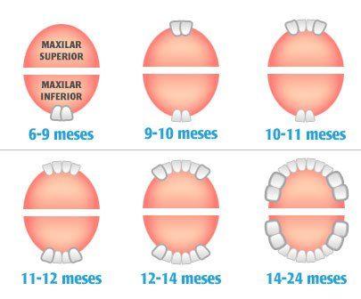 La salida del primer diente del bebé es un momento esperado y temido por todos los padres, debido a los mitos relacionados con esta etapa del desarrollo. Los dientes comienzan a salir al bebé alre...