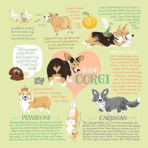 Corgi Infographic Art Print  – Corgis
