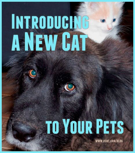 Thinking of getting a kitten? If you already have pets, read this article about introducing a new cat to your pets. [Rent.com Blog]  #pets #kittens #cats