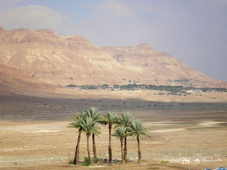 PRO kurort Курорты Израиля, Мертвое море, Эйн-Геди