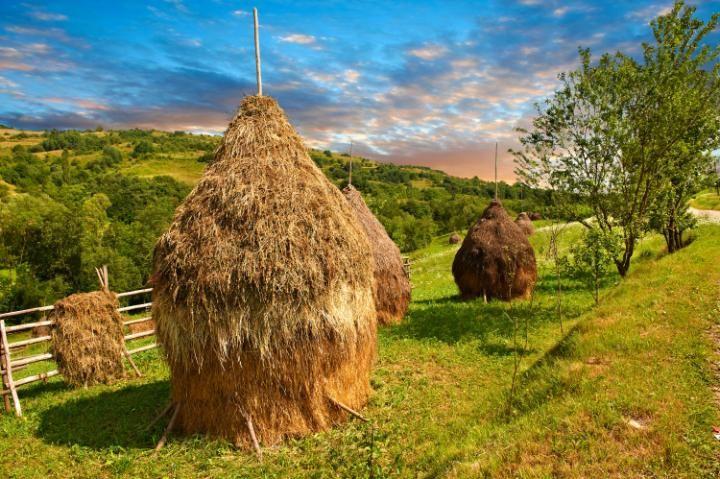 Alfalfa bales in Maramures, Transylvania