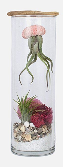 Hinterland Trading Sea Princess Air Plant Jellyfish Terrarium