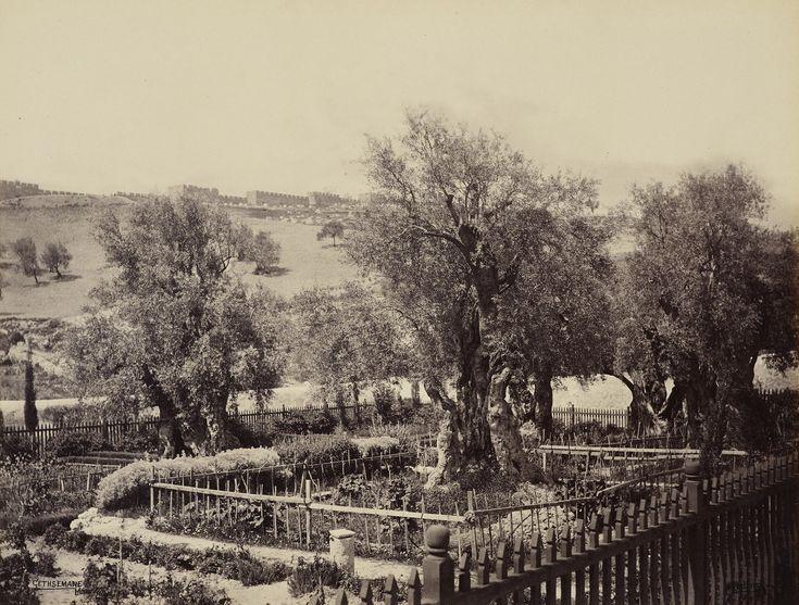 Palestine, Jerusalem. Gethsemane garden, april 2, 1862