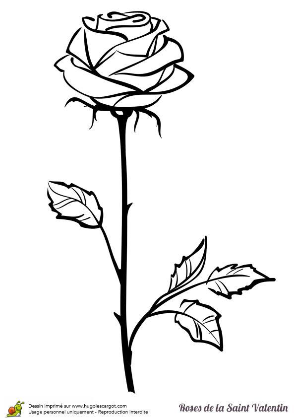 Coloriage d'une jolie tige de rose à offrir pour la saint valentin