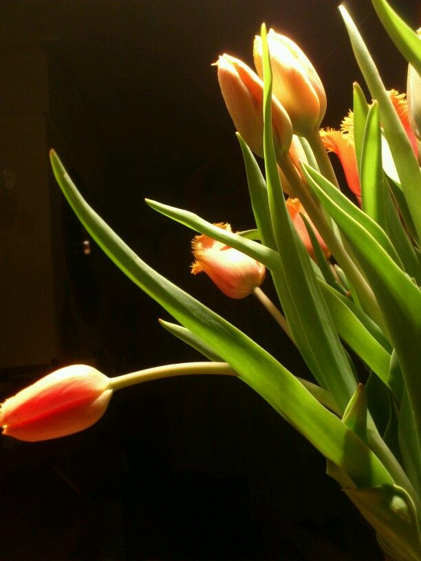 Tulips from pupils