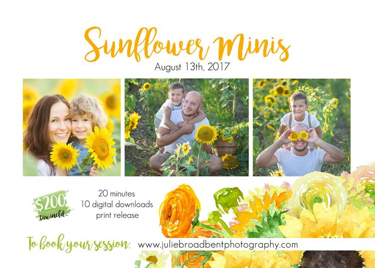 SUNFLOWER MINI SESSIONS! » Julie Broadbent Photography