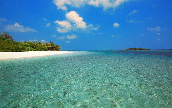 Lataa kuva Trooppinen saari, ocean, kesällä, ranta, palmuja, valkoinen hiekka, loput, Malediivit