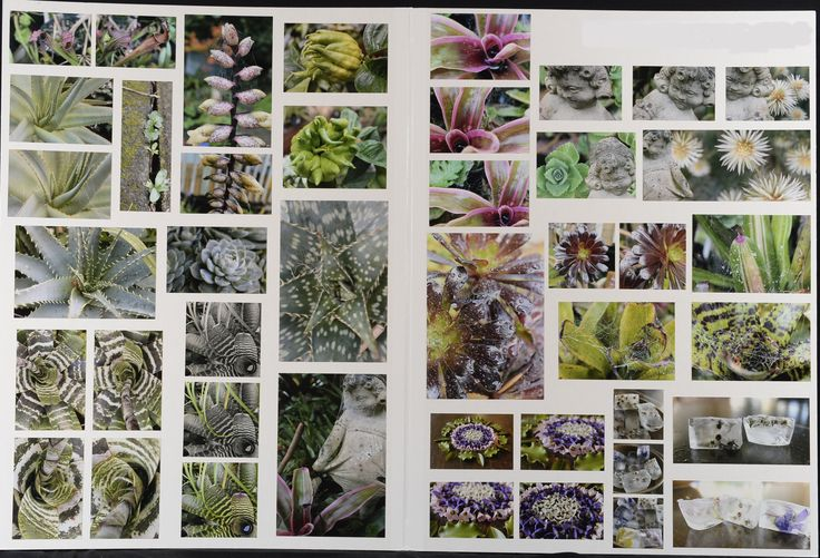 NCEA Level 2 ACHIEVED Photography Board