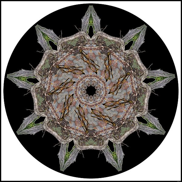 Frayed Bark by MSB Lane: Three photos of frayed bark give a delicate structure to this kaleidoscope mandala that also includes a photo of incredibly patterned rock.