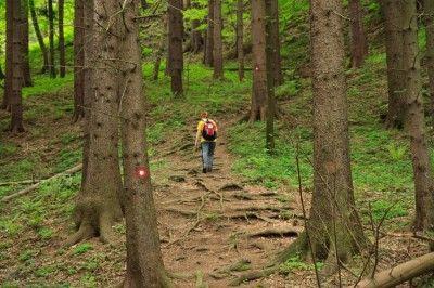 No Gun? No Problem: Improvised Self-Defense In The Wilderness