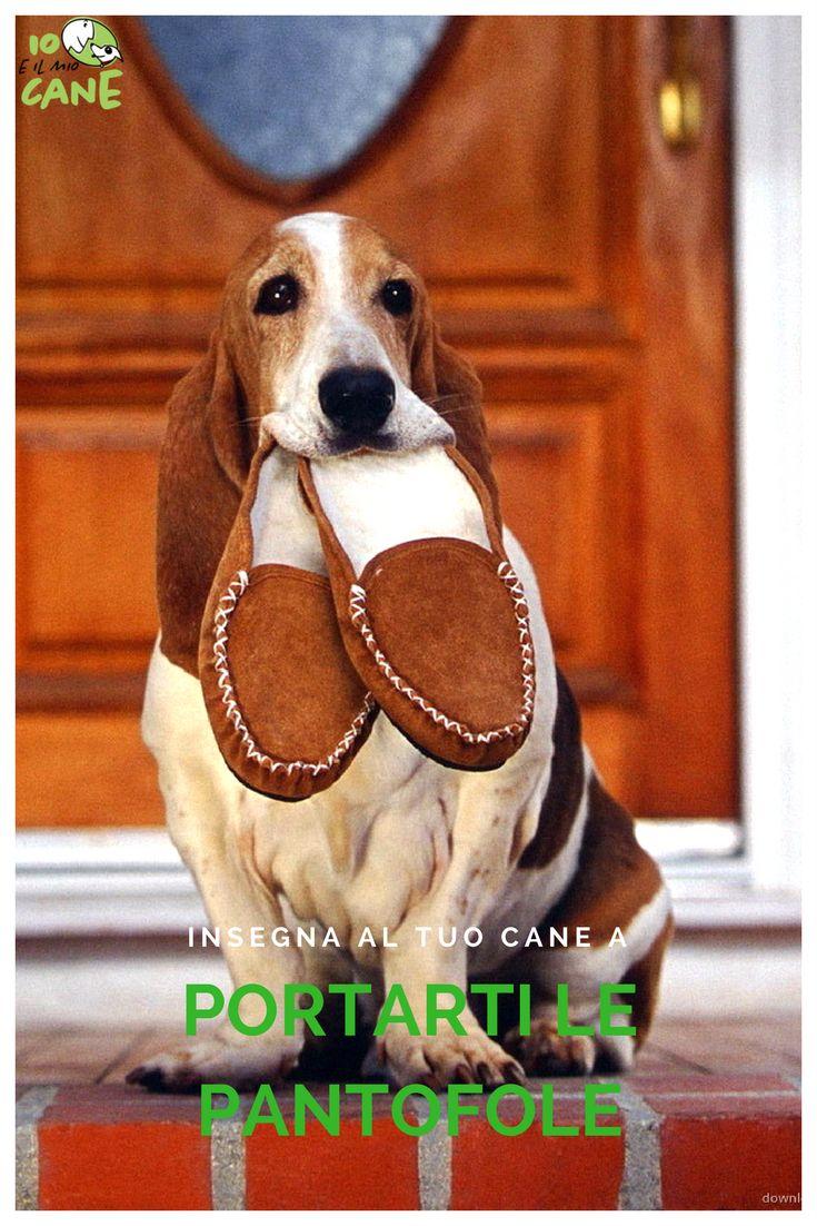 Vuoi restare in panciolle sul divano mentre il tuo cane ti porta le pantofole?