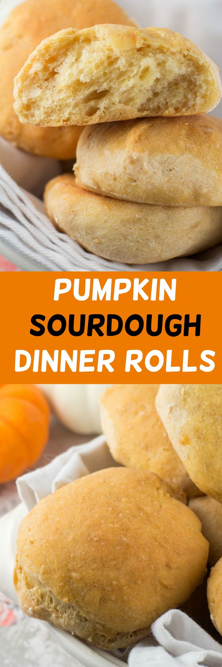 Extra soft Pumpkin Sourdough Dinner Rolls recipe. These rolls have a subtle pumpkin flavor and make the perfect roll for Fall dinners and holidays.