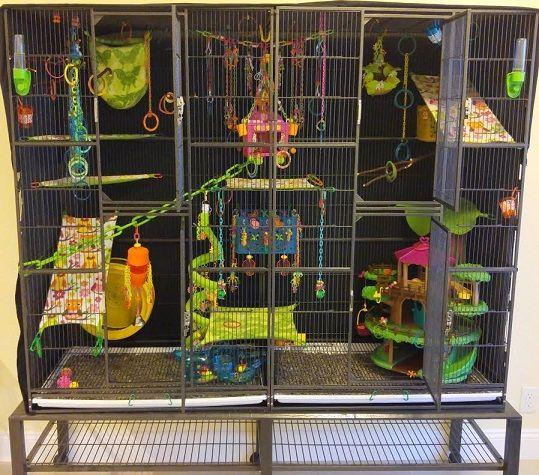 best 25 sugar glider cage ideas on pinterest rat cage