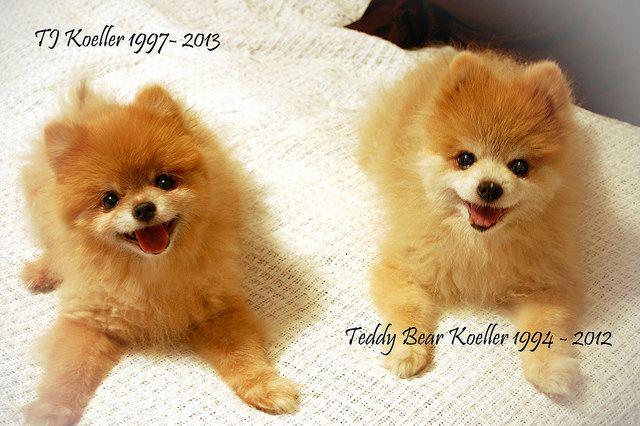 Teddy n TJ Ruled the World!