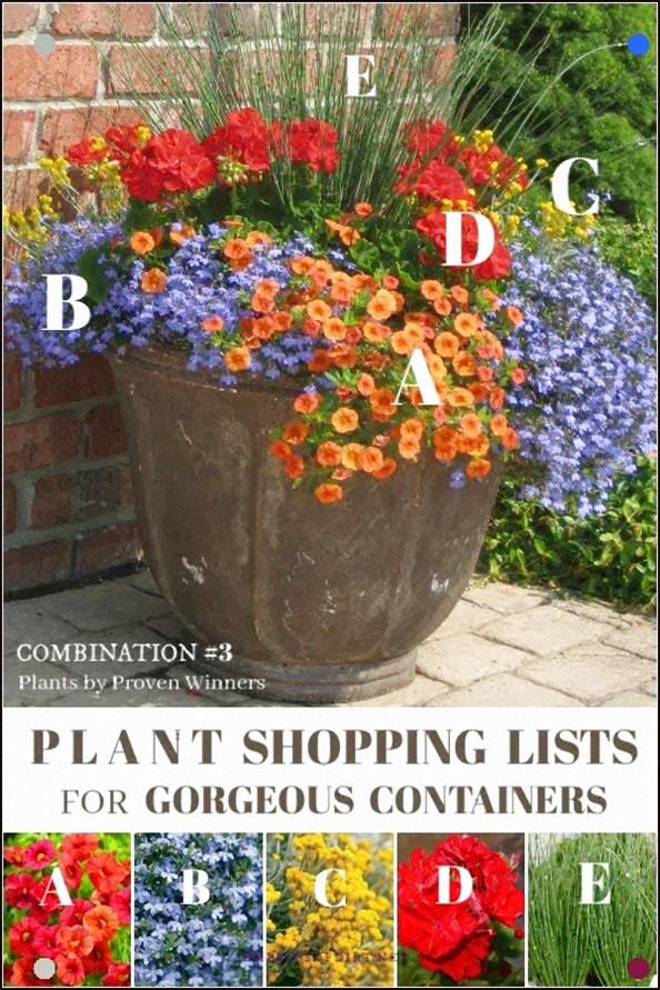 Grab This Plant List To Create This Beautiful Patio Container With