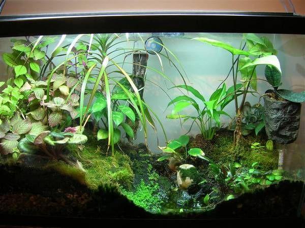 Biome Fish Tank The Paludarium Half Aquarium Half Land