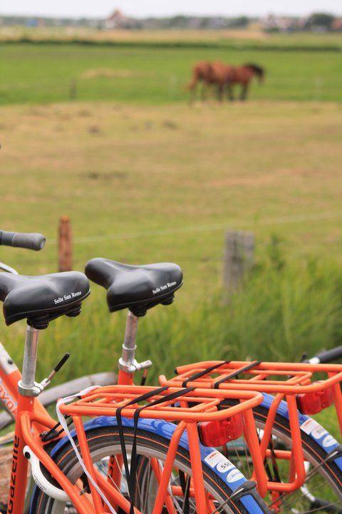 Bikes a& horses - Ameland Holland