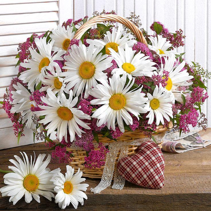 живу картинки цветов букетов ромашек римским носом высокомерен