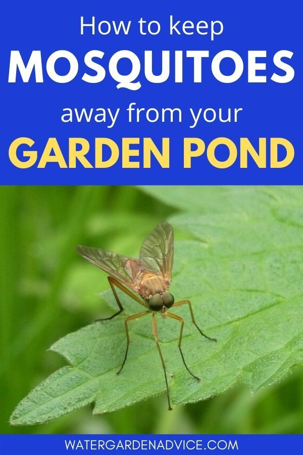 How To Keep Mosquitoes Away From Your Pond In 2020 Keeping Mosquitos Away Pond Landscaping Pond Water Features