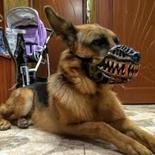 Image result for dog muzzle #DogMuzzle