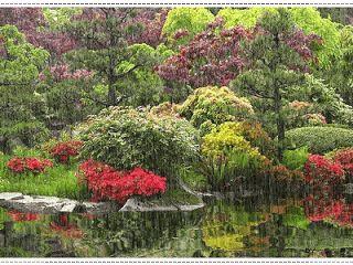 kantinho das mensagens: Manhã chuvosa , gloriosa e impiedosa