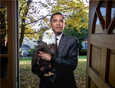 to hold an eagle: Knockknock, Like A Boss, Laughing, Funny Pictures, Weed, Knock Knock, Things, Bald Eagles, Barack Obama