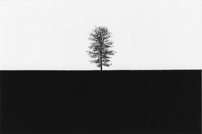 """Tree #15, Lancaster, PA, 1965<br /><br /><a href=""""/photo/tree-15-lancaster-pa-1965"""">View Image Details</a>"""