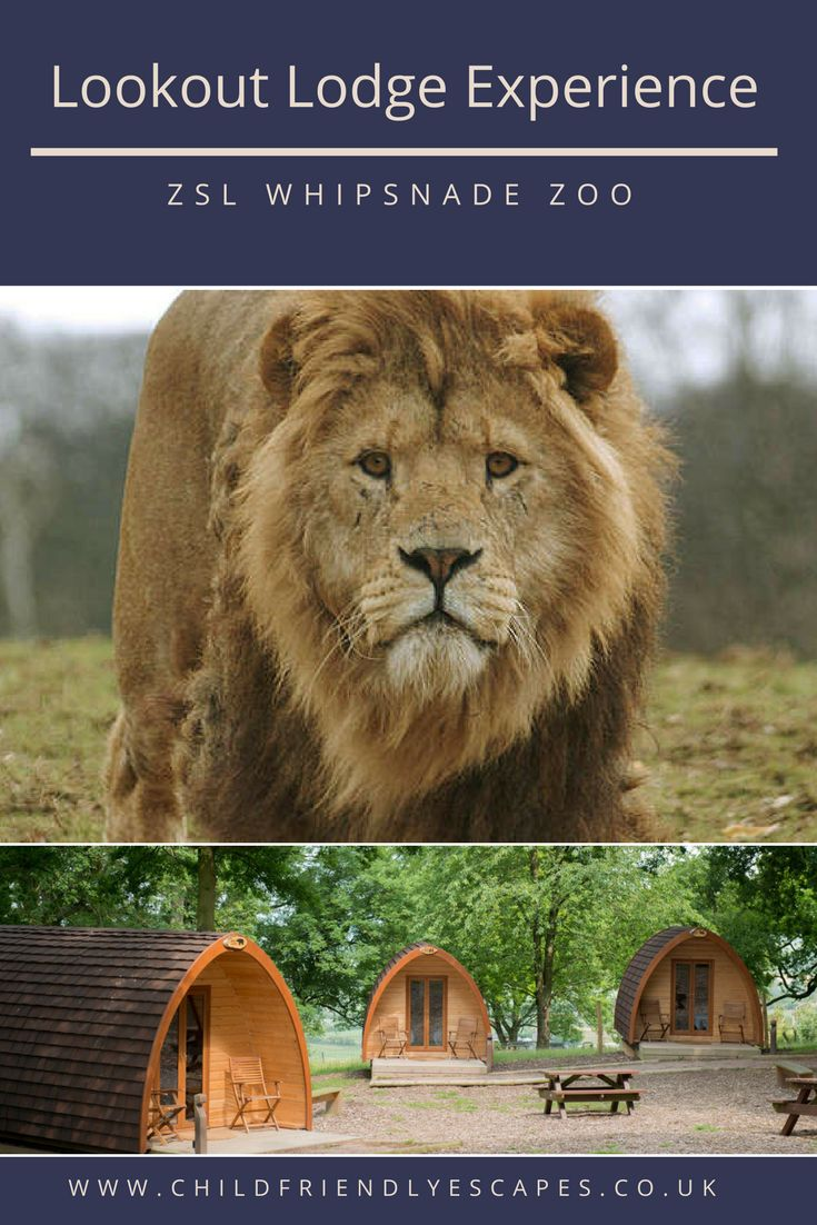 Enjoy a night with the family in one of these cosy Lookout Lodge's at ZSL Whipsnade Zoo, the kids will love it!