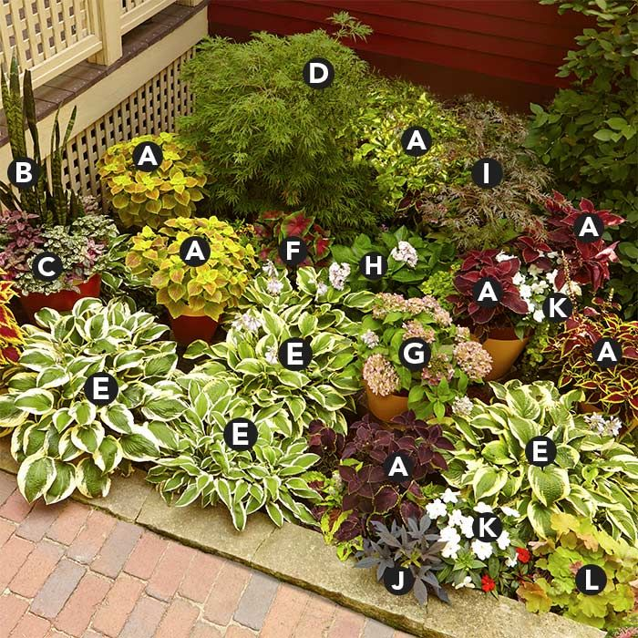 Corner Floral Garden Area: Assorted Coleus (Solenostemon Scutellarioides) Mother-in