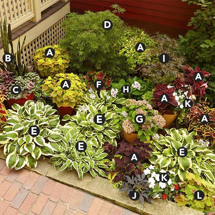 Garden Ideas Landscape Plans For Front Of House: Assorted Coleus (Solenostemon Scutellarioides) Mother-in