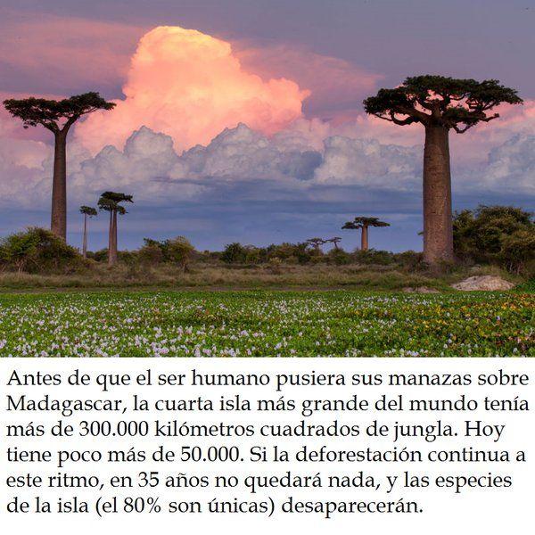 TIERRA SANA (@Ecogranjero)   Twitter