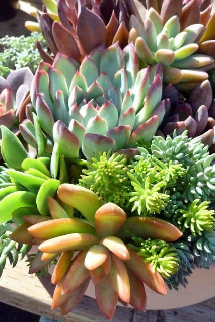 Succulent Life: Top 30 Most viewed images, tanned and shared on the blog on Facebook Fanpage - 15:04 to 21/04/2013